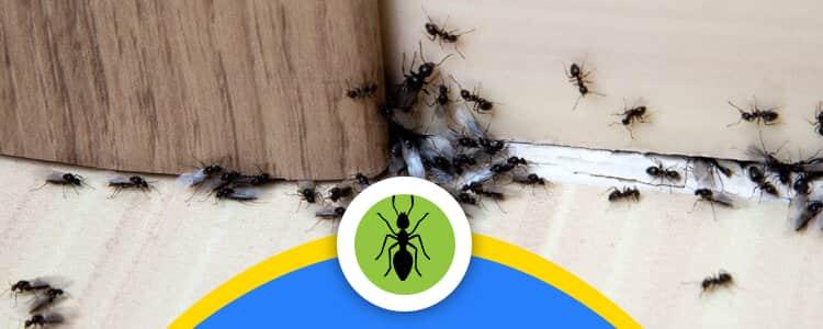 Ant Control Barton