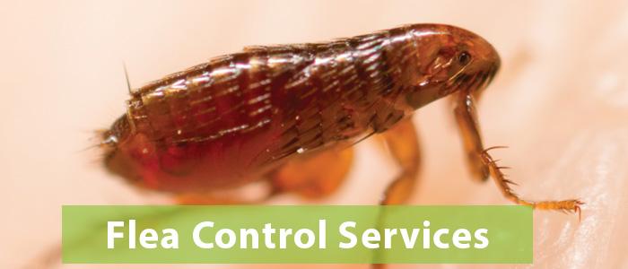 Flea Control Barton